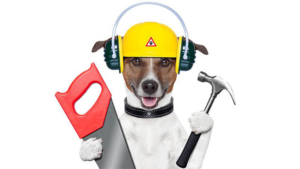 Handyman dog with hammer & a saw